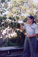 Photo of an inspector checking a home garden.