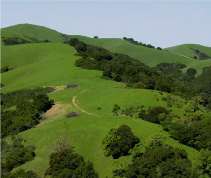Image of Rolling Hills