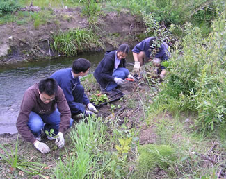 Photo of 4 people replanting a creek.