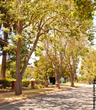 photo of a street with trees lining the sides.