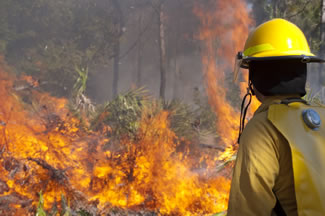 Photo of fire fighter observing a wildfire.