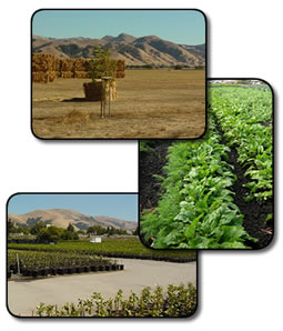 Photo shows a hay field, crop field, and a wholesale nursery all located in Alameda County.
