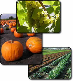 Three photos show a cluster of grapes, a field of pumpkins, and a vegetable field.