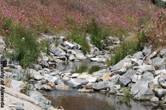 Photo shows peralya Creek restored to its natural state.